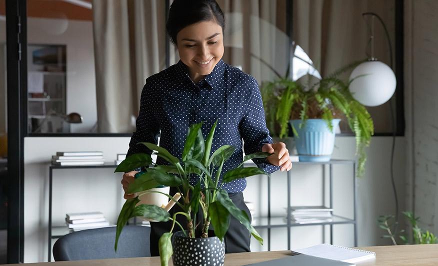 Büropflanzen- und Blumenlieferung